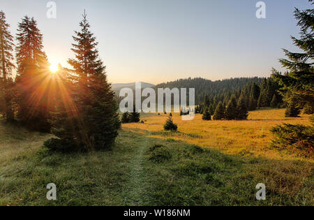 Mountain country with forest - Stock Photo