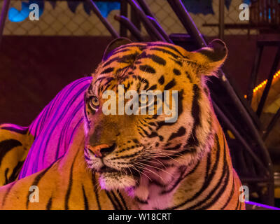View of the Tiger Show in Sriracha Tiger Zoo, Pattaya, Thailand - Stock Photo