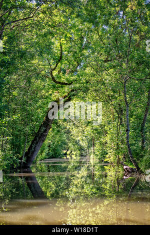 Water canal in the Green Venice in the Marais Poitevin, France - Stock Photo
