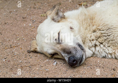 Close up of a stray dog head sleeping on the ground in a park. - Stock Photo