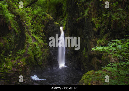 The Stanley Ghyll Force Waterfall (called also Clear Force) in an enchanted green and wild forest. Lake District National Park, Cumbria, England, UK. - Stock Photo