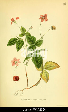 Beautiful vintage hand drawn illustrations of plants and flowers from old book. Can be used as poster or decorative element for interior design. - Stock Photo