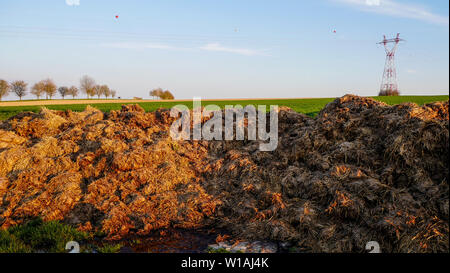 Manure pile, Champagne plain, France - Stock Photo