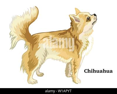 Colorful decorative portrait of standing in profile Longhaired Chihuahua, vector isolated illustration on white background - Stock Photo