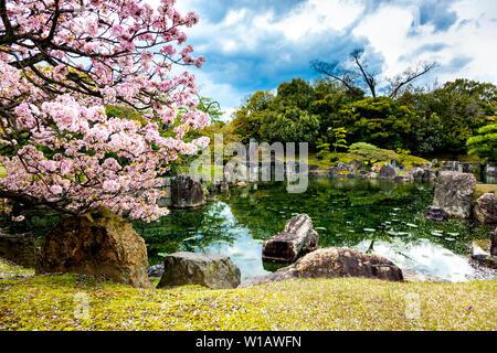Ninomaru pond and graden and gardens with cherry blossom trees next to Ninomaru Palace inside the Nijo Castle complex, Kyoto, Japan - Stock Photo