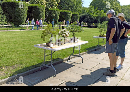 The Cleveland Bonsai Club Summer Show At The Cleveland Greenhouse In Rockefeller Park In Cleveland Ohio Usa Stock Photo Alamy
