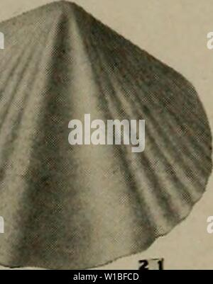 Archive image from page 388 of The Devonian of Missouri (1922)