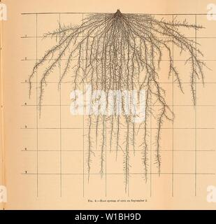 Archive image from page 40 of Development and activities of roots. Development and activities of roots of crop plants; a study in crop ecology . developmentactiv00weav Year: 1922 - Stock Photo