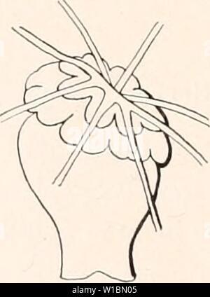 Archive image from page 433 of Deutsche Südpolar-Expedition, 1901-1903, im Auftrage. Deutsche Südpolar-Expedition, 1901-1903, im Auftrage des Reichsamtes des Innern . deutschesdpola13deut Year: 1913 - Stock Photo