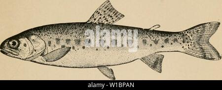 Archive image from page 44 of The determined angler and the - Stock Photo
