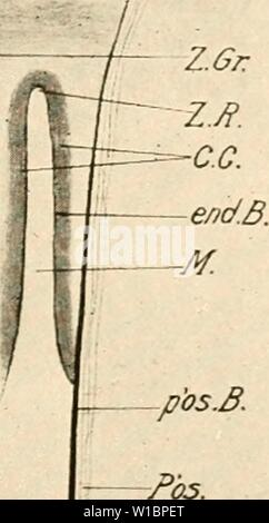 Archive image from page 440 of The development of the chick; - Stock Photo