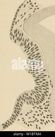 Archive image from page 458 of The development of the human - Stock Photo