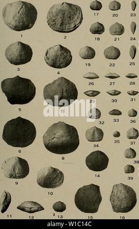 Archive image from page 492 of The Devonian of Missouri (1922) - Stock Photo