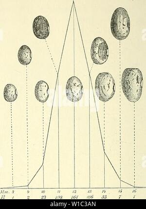 Archive image from page 51 of Die mutationstheorie Versuche und beobachtungen - Stock Photo