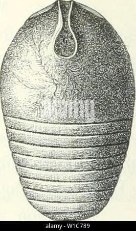 Archive image from page 55 of Die Leitfossilien, ein Handbuch für - Stock Photo