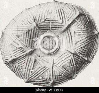 Archive image from page 562 of The Devonian crinoids of the - Stock Photo