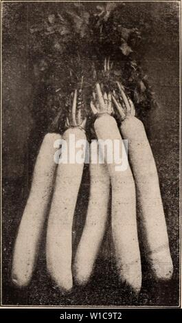 Archive image from page 576 of Descriptive catalogue of flowering, ornamental. Descriptive catalogue of flowering, ornamental trees, shrubs, bulbs, herbs, climbers, fruit trees, &c., &c., &c. / for sale by the Yokohama Nursery Co., Limited. . descriptivecatal1909yoko Year:   CATALOGUl': OF Till-: YOKOHAMA NURSERY Co., Ltd. (1913). 99    FORAGE PLANTS SEEDS. per 11). per 10 11). per 100 11) 1. lltl «ll Id i llllIlUt7l 1<III(1 (sec description p. 62) ,2.00 7.00 120.00 Polyioiniin saclialineiise 1.35 10.00 87.00 2.00 16.00 135.00 Astraialus siiiiciis .20 '.35 10.00 Astragalus late siaiit .... - Stock Photo