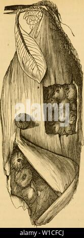 Archive image from page 620 of Die Insekten (1877) Stock Photo