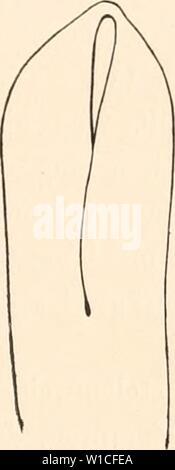 Archive image from page 624 of Deutsche Südpolar-Expedition, 1901-1903, im Auftrage. Deutsche Südpolar-Expedition, 1901-1903, im Auftrage des Reichsamtes des Innern . deutschesdpola16deut Year: 1921 - Stock Photo