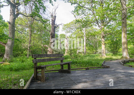 Bench by a wooden footpath in the nature reserve Halltorps Hage with old oak trees on the swedish island Oland - Stock Photo