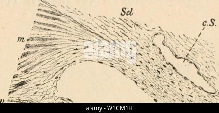 Archive image from page 682 of Dictionnaire de physiologie (1913) - Stock Photo