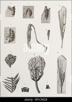 Archive image from page 682 of The Devonian crinoids of the - Stock Photo