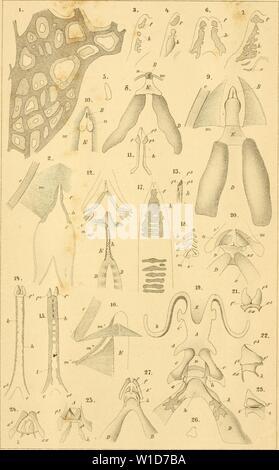 Archive image from page 922 of Die Klassen und Ordnungen des - Stock Photo