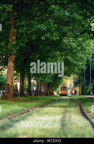 Old red city tram goes through green tunnel in dense forest in Milan, Italy