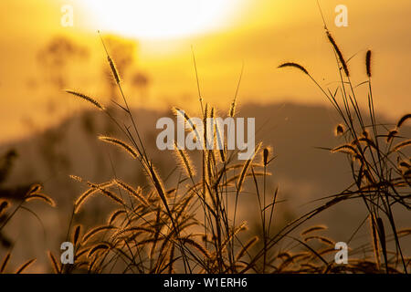Grass and blurry background image of the sun in the morning. - Stock Photo