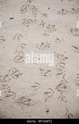 Footprints of seagulls on the sand of the beach