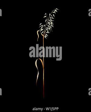 Wild Oat (Avena sterilis) silhouetted on black background - Stock Photo