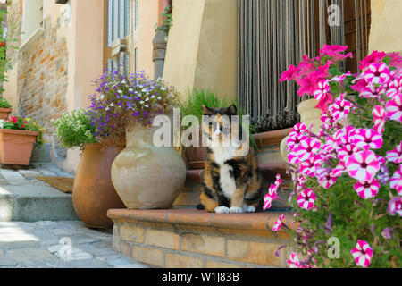 Serious brown and black Italian cat with green eyes sitting on the stairs and surrounded by various ping and blue blooming flowers during hot summer t