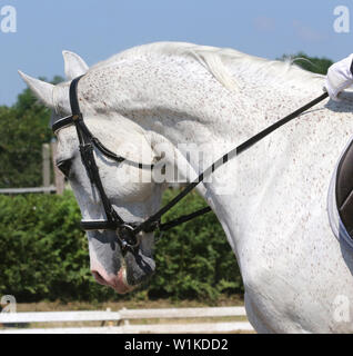 Unknown contestant rides at dressage horse event on riding ground indoors - Stock Photo