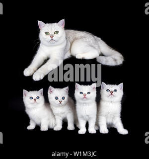 White mother cat with nest of four kittens isolated on black background - Stock Photo