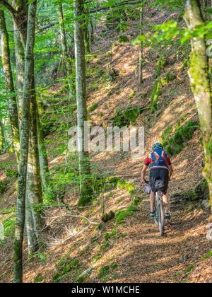 Mountain biker cycling through forest, near Todtnau, Baden Württemberg, Germany - Stock Photo