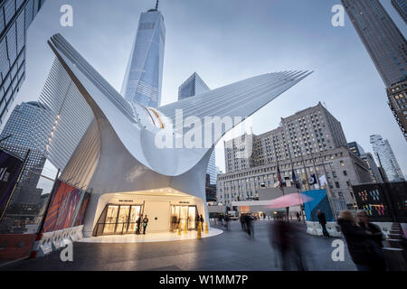 the Oculus and One World Trade Center exterior at dusk, futuristic train station by famous architect Santiago Calatrava next to WTC Memorial, Manhatta - Stock Photo