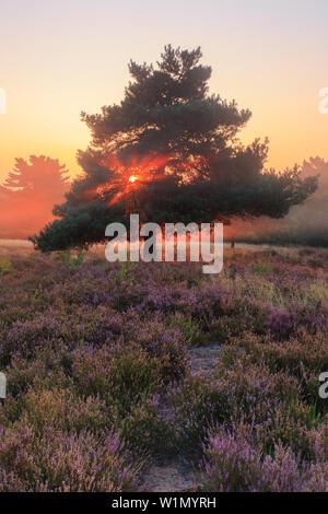 Sunbeams over Mehlinger heath, Mehlingen, Kaiserslautern, Rhineland-Palatinate, Germany - Stock Photo