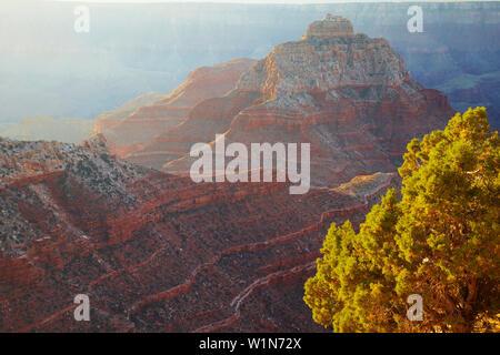 View from Cape Royal at Vishnu Temple and the South Rim , North Rim , Grand Canyon National Park , Arizona , U.S.A. , America - Stock Photo