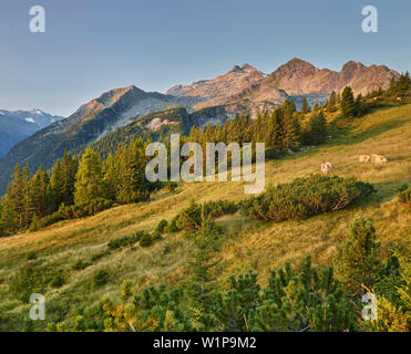 View from the plattenkogel to the Rosskopf, hochkrimml, Venediger Group, Hohe Tauern, Salzburg, Austria - Stock Photo