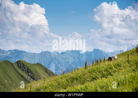 Hiking on Fellhorn ridge, mountain panorama, hiking trails, summer, Oberstdorf, Oberallgaeu, Germany - Stock Photo