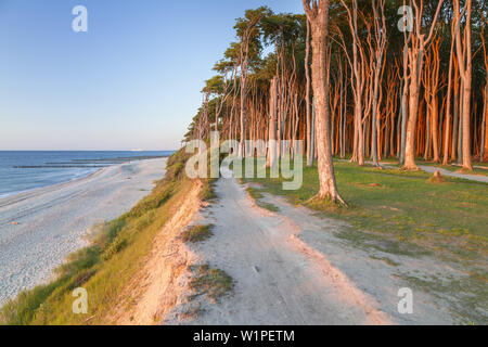 Path along the cliffs and beech forest in Nienhagen, Baltic Sea Coast, Mecklenburg-Western Pomerania, Northern Germany, Germany, Europe - Stock Photo