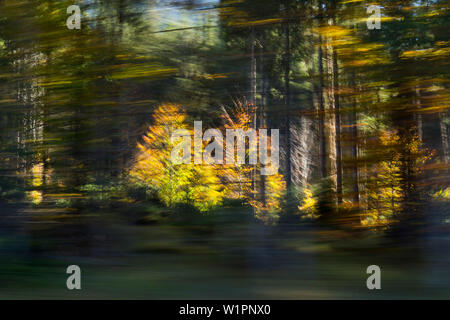 moving forest, moved trees, abstract, autumn, Bavaria, Germany, Europe - Stock Photo