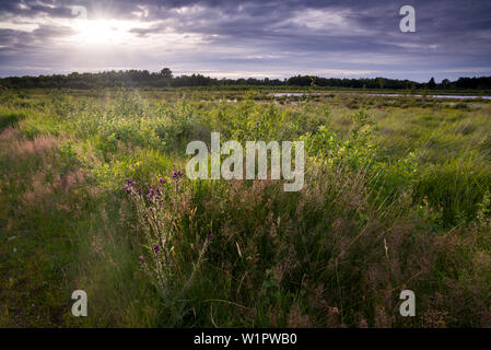 Goldenstedter Moor in the evening light, Goldenstedt, Vechta, Wildeshauser Geest, Lower Saxony, Germany - Stock Photo