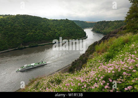 Excursion ship at the Rhine river, view from Rheinsteig hiking trail to Loreley, near St Goarshausen, Rhine river, Rhineland-Palatinate, Germany - Stock Photo