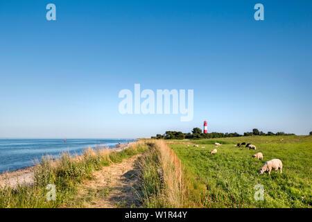 Sheep in front of Falshoeft lighthouse, Falshoeft, Angeln, Baltic coast, Schleswig-Holstein, Germany - Stock Photo
