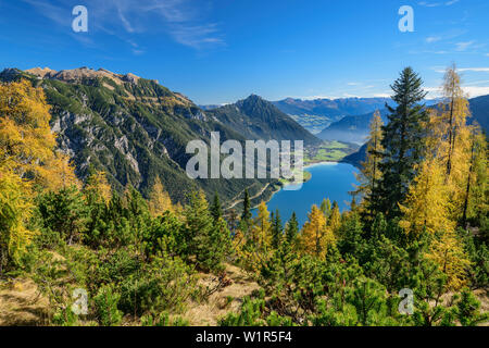 Larch trees in autumn colours with view towards Rofan above lake Achensee, from Seebergspitze, Karwendel range, Tyrol, Austria - Stock Photo