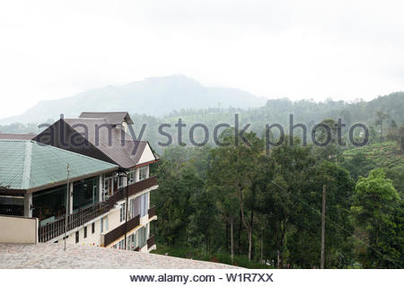 Tea Plantage in Sri Lanka - Stock Photo
