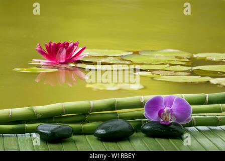 wellness setting with black massage stones, some bamboo stalks and purple orchid flower.In the background a pond with a lotus flower - Stock Photo