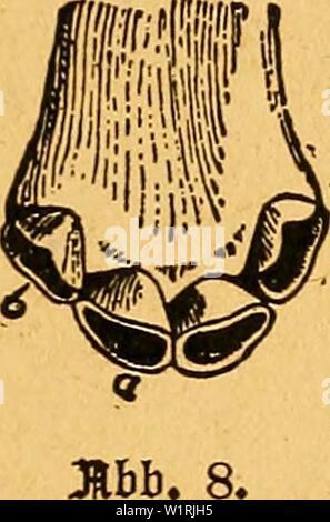 Archive image from page 66 of Das pferdebuch des amerikanischen farmers. Das pferdebuch des amerikanischen farmers  daspferdebuchdes00hoff Year: 1917 äljnB BtnES 6 8[a0B alfsn    BäljnB Binca 6 Jflljlsn». Stock Photo