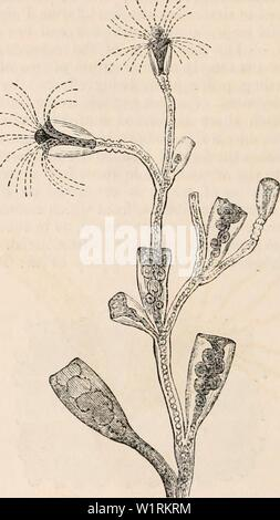 Archive image from page 69 of The cyclopædia of anatomy and - Stock Photo